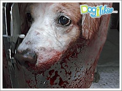 Dogilike.com :: รวมฮิตโรคร้ายในสุนัขที่เกิดจาก เห็บ
