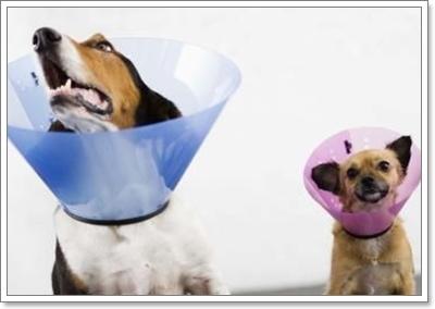 Dogilike.com :: การรักษาตัวเองของสุนัข ตอน สุนัขเลียแผล