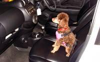 REVIEW : สายรัดนิรภัยสำหรับสุนัข