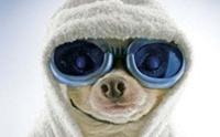 การดูแลสุนัขในฤดูหนาว