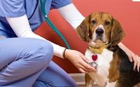 ดูแลหัวใจสุนัขให้ดี ... มารู้จักโรคหัวใจในสุนัขกัน