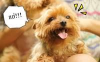 เลือกวิธีฝึกยังไงให้เหมาะกับนิสัยน้องหมาของเรา