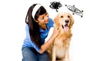3 อาการอันตรายที่มักเกิดขึ้นกับน้องหมาในหน้าร้อน
