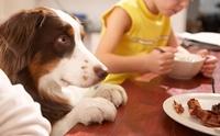 ฝึกพฤติกรรมการกินของสุนัข
