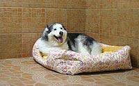REVIEW :โรงแรมสุนัขและที่รับฝากเลี้ยงสุนัข