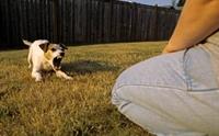 เมื่อเจอน้องหมาแปลกหน้า จะทำความรู้จักเขาได้ยังไง?