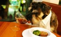 ดัดนิสัยน้องหมาชอบขอของกิน!