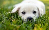 เลือกเลี้ยงสุนัขยังไงให้เหมาะกับไลฟ์สไตล์ของเรา