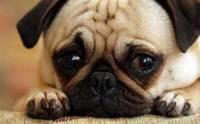 4 นิสัย ของลูกสุนัขที่ต้องแก้ไข