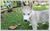 REVIEW : สวนและสถานที่พาน้องหมาไปเดินเล่น