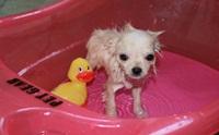 อาบน้ำลูกสุนัขยังไงให้ถูกวิธี