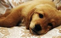 ลำไส้อักเสบติดต่อ โรคร้ายใกล้ตัวสุนัข