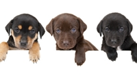 เราควรเริ่มฝึกน้องหมาเมื่อไหร่ดี?