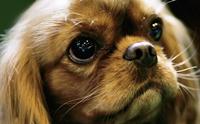 ชวนคนรักสุนัข มารู้จักใบเพ็ดดีกรีให้มากขึ้น