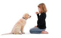 จับลูกสุนัขเข้าโปรแกรมฝึกขั้นพื้นฐาน ตอนที่ 1
