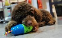 REVIEW : ของเล่นฝึกสมาธิสุนัข