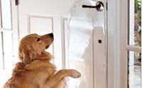ฝึกลูกหมาให้ขออนุญาตก่อนออกจากบ้าน