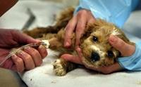 11 เรื่องจริงของโรคไข้หัด ที่คนรักสุนัขต้องรู้
