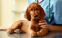 การทำหมันในสุนัข สำคัญไฉน