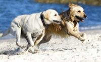 ดูแลประสาทสัมผัสทั้ง 4 ของสุนัขอย่างถูกวิธี