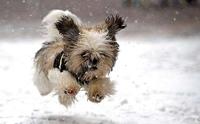 จัดการปัญหา น้องหมาหนีเที่ยว!!