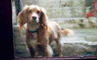 เคลียร์ปัญหา กลิ่นตัวน้องหมาในหน้าฝน