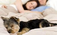 รู้ไว้ ก่อนอนุญาตให้น้องหมามานอนด้วย