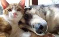 ฝึกน้องหมายังไงให้อยู่กับน้องแมวได้