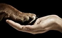 เรกิ สัมผัสบำบัด เพื่อน้องหมาสุดรัก [ตอนที่ 1]