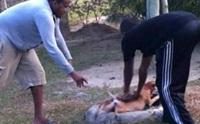 สุดโหด! วัยรุ่นมาเลเซียจับสุนัขยัดท่อทั้งเป็น