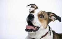 10 คำถามสุดฮิตของโรคเต้านมอักเสบในสุนัข
