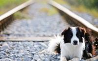 REVIEW : ปู๊น ปู๊น พาน้องหมาขึ้นรถไฟกัน