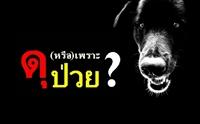 สุนัขดุ !! (หรือ) เพราะป่วย ?