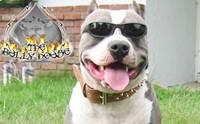 แว่นตาเท่ๆของเหล่าสุนัขสายพันธุ์ดุ