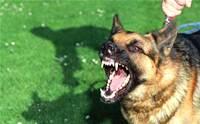 เลี้ยงสุนัขผิดๆ มีสิทธิ์ทำให้สุนัข
