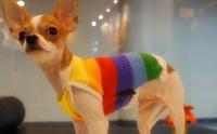 REVIEW:  เสื้อไหมพรมอุ่นๆ สำหรับน้องหมา