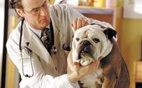 สุนัขดุแค่ไหน?  ต้องพาไปบำบัดรักษา