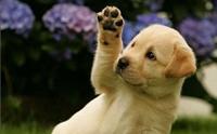 ฝึกน้องหมาให้สวัสดี ^^