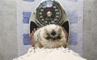หยุด !! โรคอ้วนในสุนัข ด้วยหลักโภชนาการอาหารที่ถูกต้อง