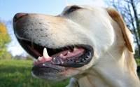 REVIEW : เจลกำจัดกลิ่นปากสำหรับน้องหมา