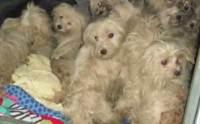 อึ้ง! พบสุนัข 50 ตัว ถูกทิ้งวิ่งเกลื่อนถนนในสหรัฐฯ