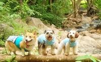 REVIEW : หนาวปีนี้ พาน้องหมาเที่ยวที่แม่ฮ่องสอน