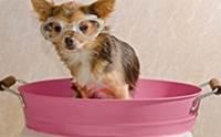 การอาบน้ำสุนัขพันธุ์เล็กอย่างถูกวิธี