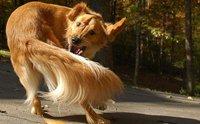 โรคสุดแปลกของสุนัข ที่หลายคนอาจยังไม่เคยรู้จัก