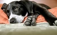 5 ปัญหาสุขภาพและการดูแลน้องหมาที่พบบ่อยที่สุดในปี 2012