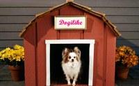 6 ภัยร้ายใกล้ตัวสุนัขที่มีอยู่ในบ้าน