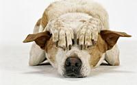 3 อาการป่วยของน้องหมา ที่เจ้าของมืออาชีพไม่ควรมองข้าม