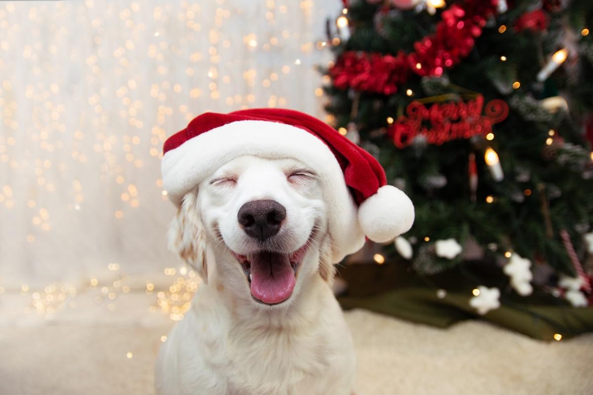 เริ่มต้นปีใหม่ด้วยการเลี้ยงน้องหมาอย่างมืออาชีพ!!