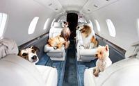 Review : สายการบิน(ในประเทศ)ที่ให้น้องหมาเดินทางไปด้วยได้