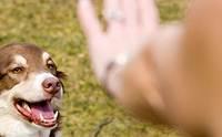 จัดการกับ 8 นิสัย สุดเกรียนของน้องหมาอย่างมืออาชีพ